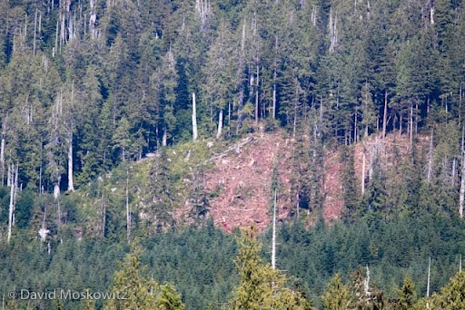 Active clearcut logging in Clayquot Sound. Top of the photo is uncut oldgrowth. Bottom is regrowth from a previous clearcut.