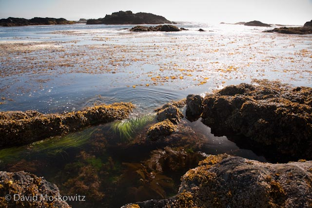 Rocky coastline close to Wye Point, north of the town of Ucluelet