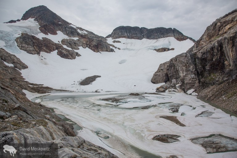 Glacial ice exposed at the very top of the Colonial glacier (upper left of this photo) suggests that this glacier no longer has an accumulation zone. Under current conditions, it is just a matter of time before the glacier disappears completeley–perhaps within the next several decades.