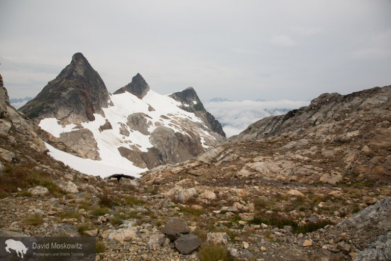 Paul Bunyon's Stump, Pinnicle, and Pyramid peaks from Colonial-Neve glacier col.