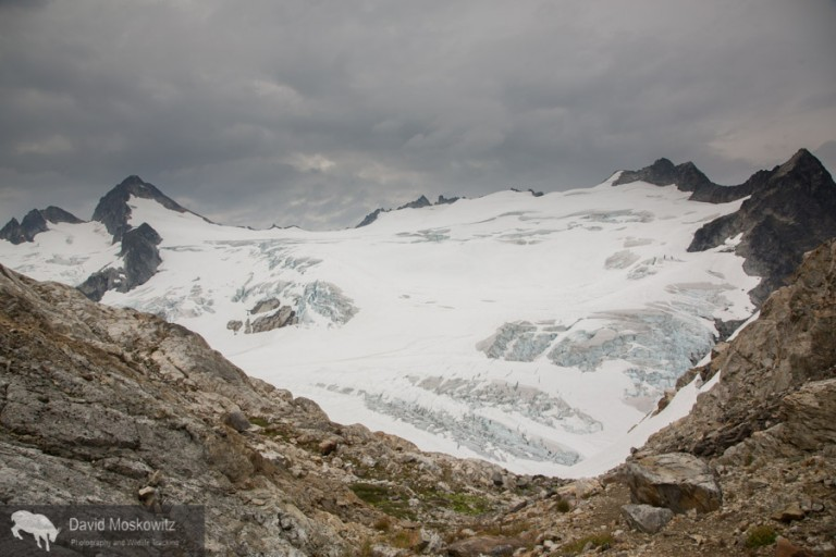 The vast exapanse of one of the largest glaciers in the North Cascades, the Neve Glacier with Snowfield Peak sitting at its head, on the left side of the frame. Seen from the Neve-Colonial glaicer col.