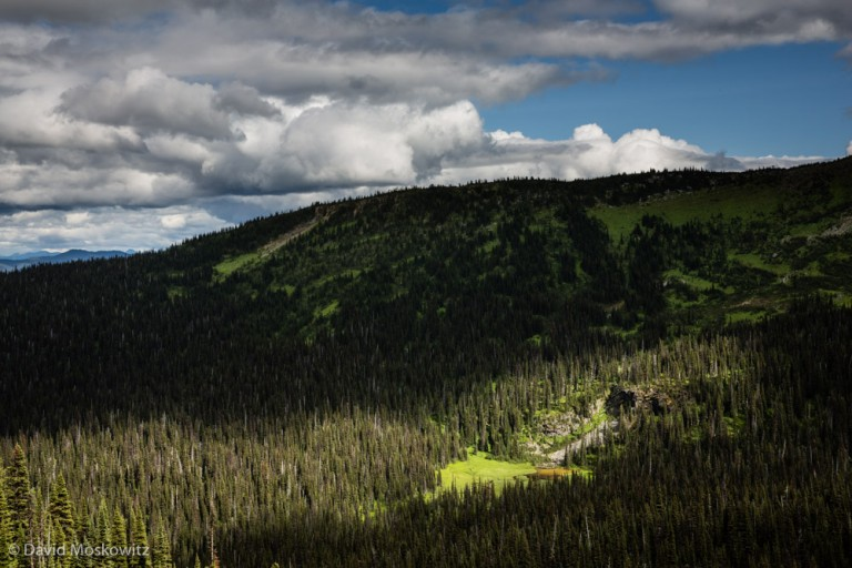 The wet meadow system was miles from the closes road or trail. With huge amounts of inaccessible forested landscapes to spread out in, mountain caribou can seemingly disappear into these mountains.