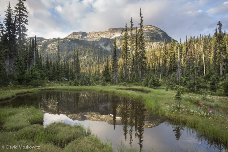 The subalpine landscape that caribou appear to prefer is one made of dense forests and wet meadows. This is a species that is definitely NOT afraid to get its feet wet.