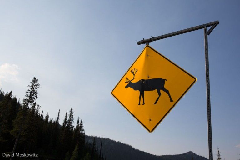 Caribou crossing sign close to Kootenay Pass on Canada's Highway 3.