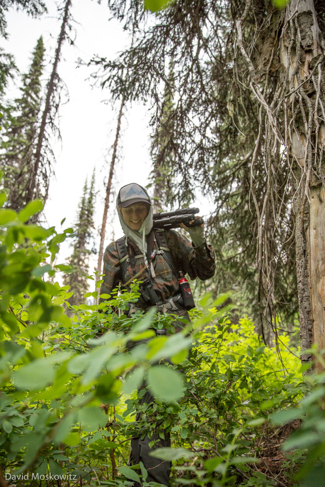 Kim Shelton plowing through the subalpine brush in the heavily forested Selkirk mountains searching for signs of one the remaining members of the Southern Selkirks caribou herd.