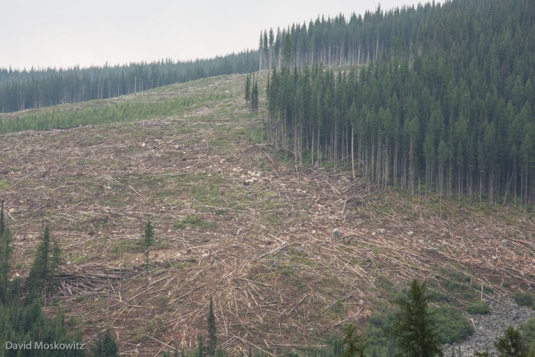 A large clearcut south of the Darkwoods Conservation Area, outside of the preserve on private timber land. The  Nature Conservancy of Canada purchased Darkwoods to protect quality caribou habitat from ending up looking like this.