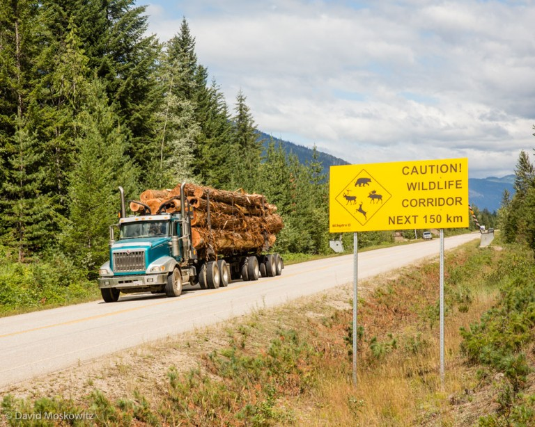 A log truck carrying western red cedar logs out of the home range of the Columbia North Caribou herd, past a sign warning motorists to watch out for wildlife on the road.