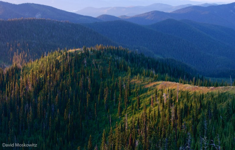 Caribou country in northeastern Washington's Selkirk mountains.