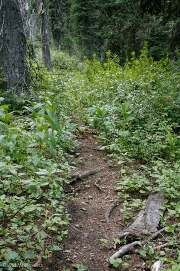 Caribou trail in the Selkirk mountains of southern British Columbia.