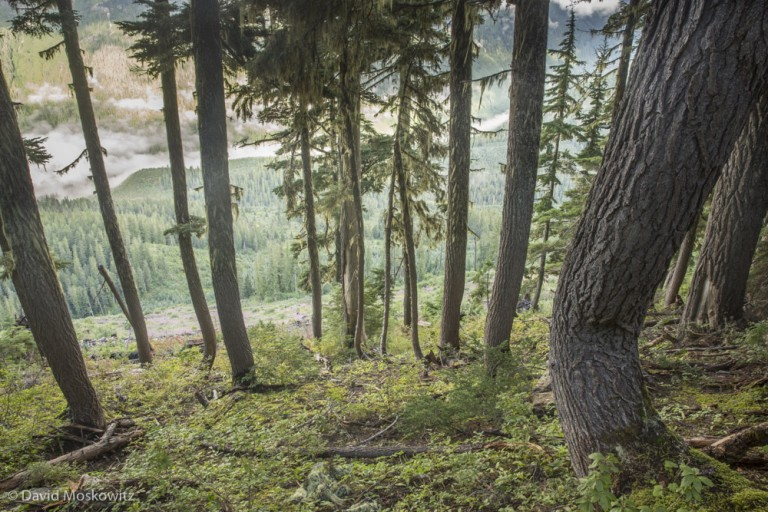 Trees at the edge of a clearcut. Upper Seymour River valley, British Columbia.