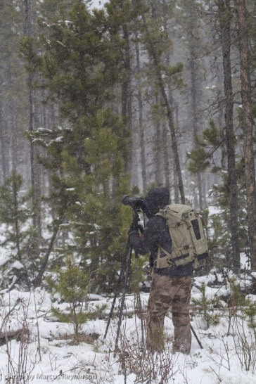 A glimpse into fall field conditions for caribou and photographers alike. Photo by Marcus Reynerson.