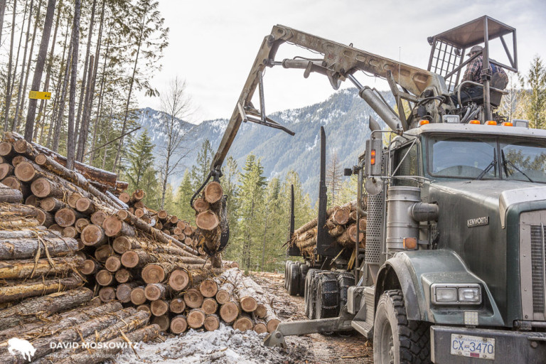 A self-loading logging truck is loaded with western red cedar logs bound for a local mill which specializes in cedar products. Logs are sorted in the field with various logs going to the Community Forest's own mill or other mills in region depending on the species and quality of the logs.
