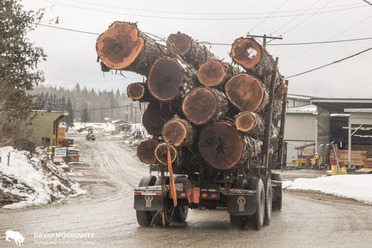 Log truck carrying old growth logs into the lumber mill in Revelstoke British Columbia.