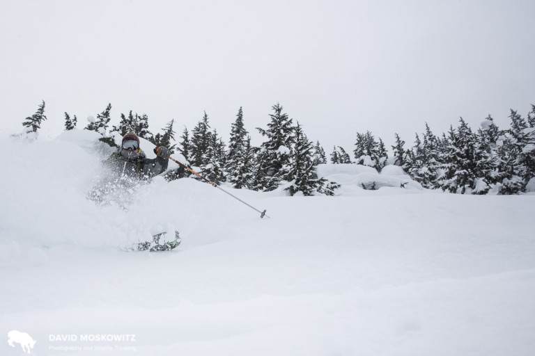 Deep powder snow, and seemingly endless mountains to explore it in, attracts the booming winter tourism economy in Revelstoke. Colin Arisman carves some powder in Glacier National Park.