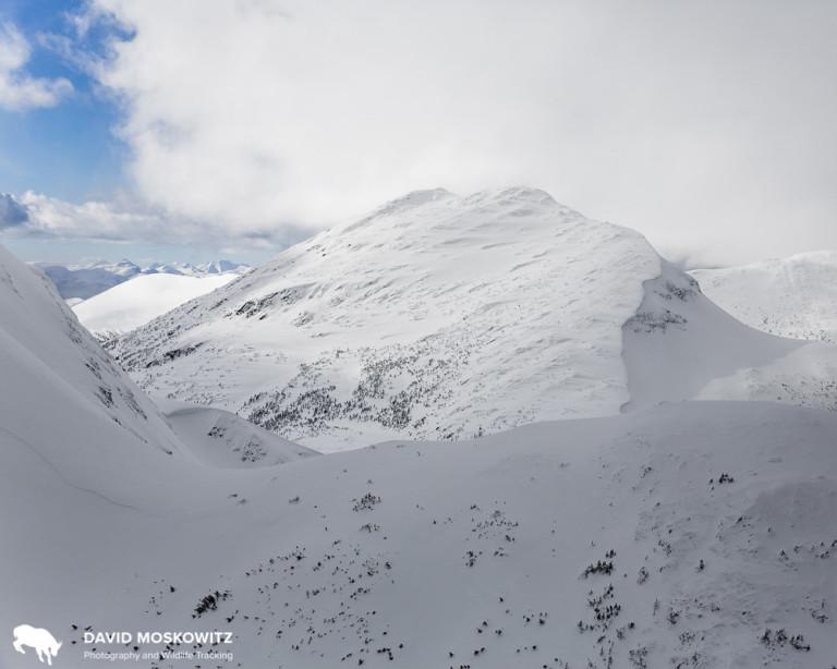 Winter mountain caribou habitat in the Hart Range, BC. Photo by David Moskowitz.