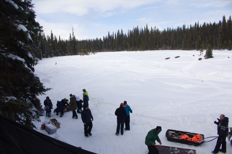 A view of the 18 acre pen. On the left, a group of biologists and veterinarians work on a caribou that has just arrived. Photo by Marcus Reynerson.