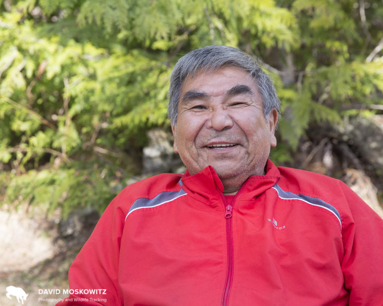 Former logger Leanard Edwards, member of Splatsin First Nation, shared his thoughts about caribou and his other work as an environmental monitor from the Revelstoke Maternity pen where he helps look after the captive cows and calves.