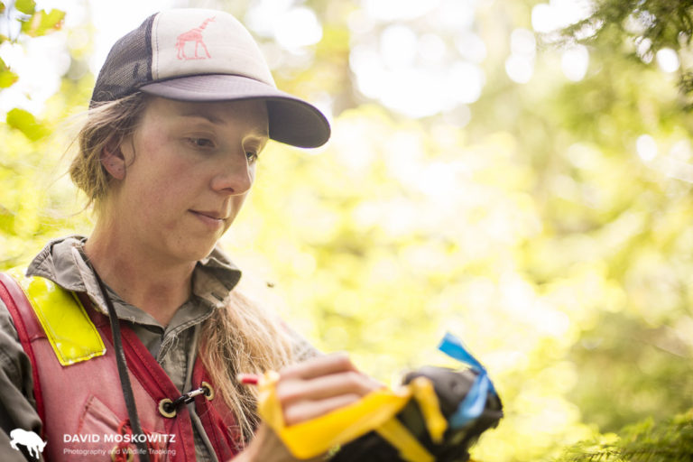 Kate Devine, of Revelstoke BC, spends her summers cruising timber (evaluating stands of trees for their lumber value) and her winters working as a backcountry ski guide.