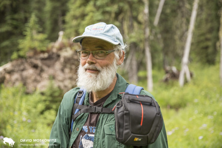 Ecologist Greg Utzig of Nelson British Columbia was part of the negotiations to create the 2007 Mountain Caribou Recovery Plan which currently steers conservation efforts of caribou in British Columbia.
