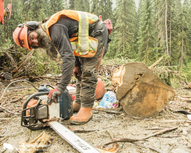 Paul Sarafinchan has been logging for three decades in the interior of British Columbia.