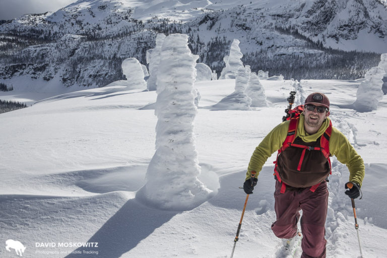 Colin Arisman skinning up through treeline in the Columbia Mountains in February 2016 on a multiday backcountry tour in the winter range for the North Columbia herd.