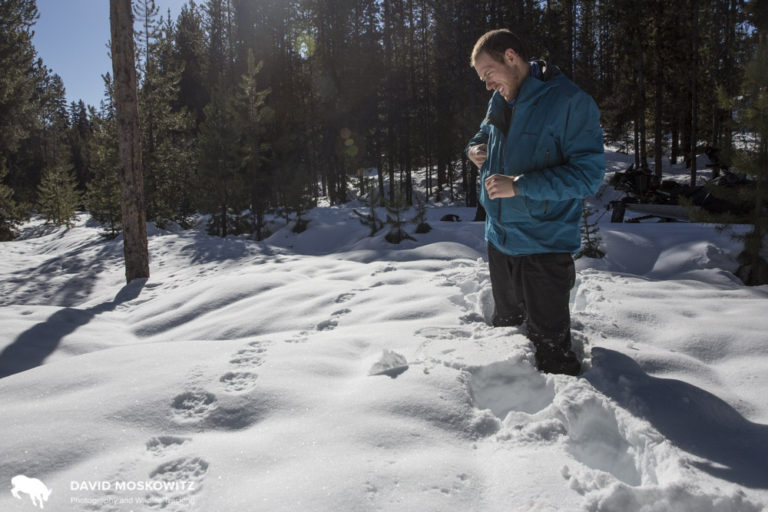 Cody inspecting the fresh trail of a wolverine in Montana.