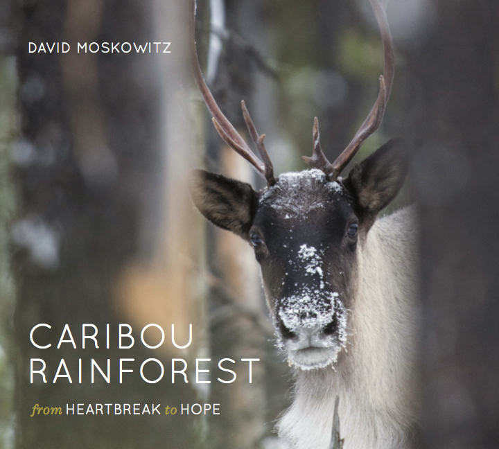 Caribou Rainforest - In a North American rainforest, that few people even know exists, about a dozen dwindling herds of caribou are struggling to survive.