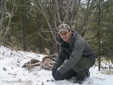 A photo of myself. As part of setting a camera trap I will trigger the camera and then inspect the images it is capturing to make sure the focal area of the camera is capturing the area I am interested in. Behind me is the remains of a mule deer that had been killed and consumed by wolves several weeks earlier. Here I am using the carcass as an attractant to draw carnivores into the range of the camera.