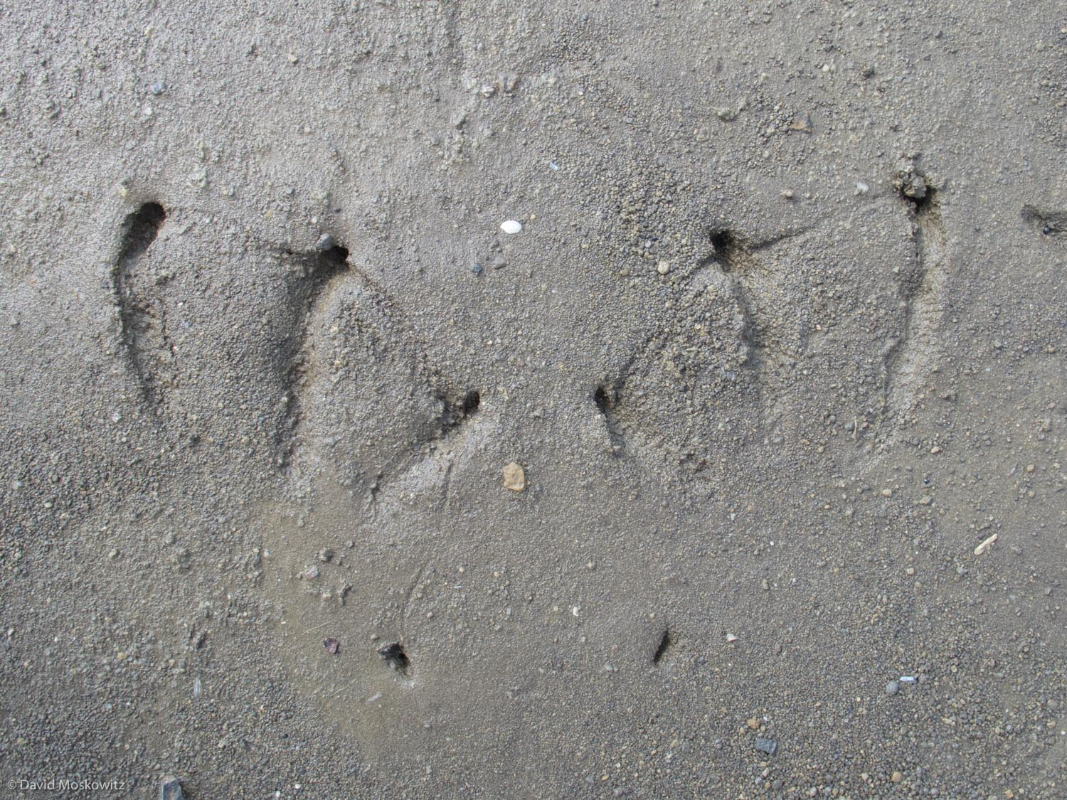 Tracks of a Great cormorant from the shore of a reservoir in the Liptovsky region of Slovakia.