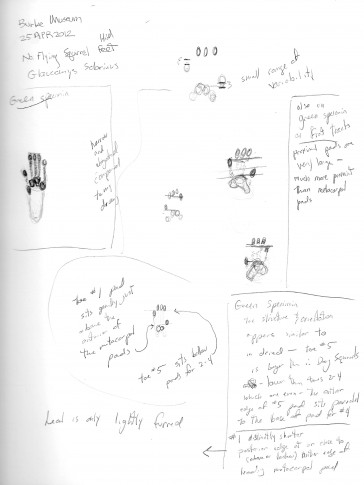 Notes and sketches from my research at the Burke Museum from 2012.
