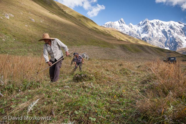 Three men from the village of Iprali work in concert cutting wild hay in a high elevation meadow in the Sveneti region of the Republic of Georgia.