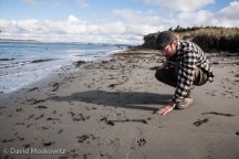 Naturalist Justin Lake, who assisted me in delivering the evaluation, inspects tracks along the beach on the edge of the Strait of Juan De Fuca, Washington.