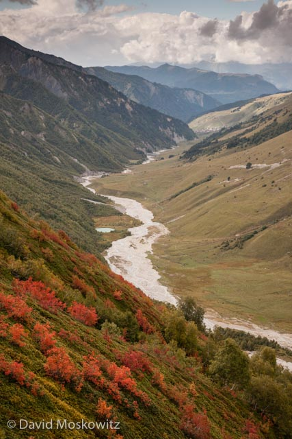 Mountain ash's brilliant red-orange after the onset of fall temperatures above the glacier fed river leading down to the tiny and remote village of Adishi. Sveneti Region, Republic of Georgia.