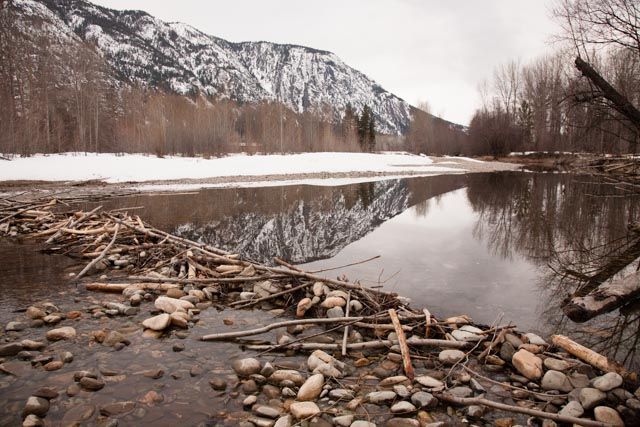 A family of beavers had been busy through the winter on a side channel of the Methow River, leaving a wide variety of interesting signs behind including this small dam.