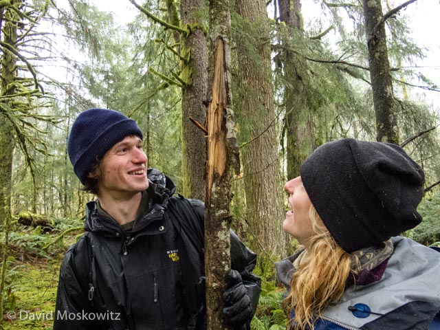 Teaching assistant Dan Gusset and student Erin Campbell inspect the bite mark of a black bear found on a small tree along a game trail. Such marks are commonly produced by scent marking bears whom also claw and rub such trees in efforts to attach their scent to tree for other bears to find.