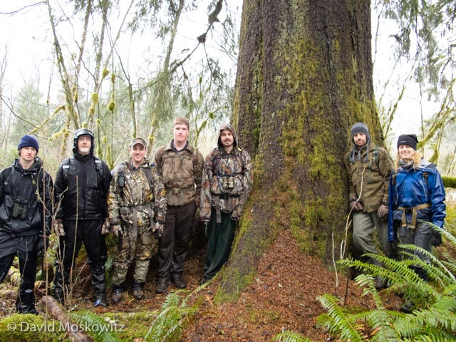The class under a particularly large Sitka spruce on the bank of the Middle Fork of the Snoqualmie River. The large amount of reddish debris at the base of the tree is the result of a feeding Douglas squirrel. Such a midden is created when the squirrel consumes conifer cones from a favored perch and discards the remains onto the forest floor below the perch.