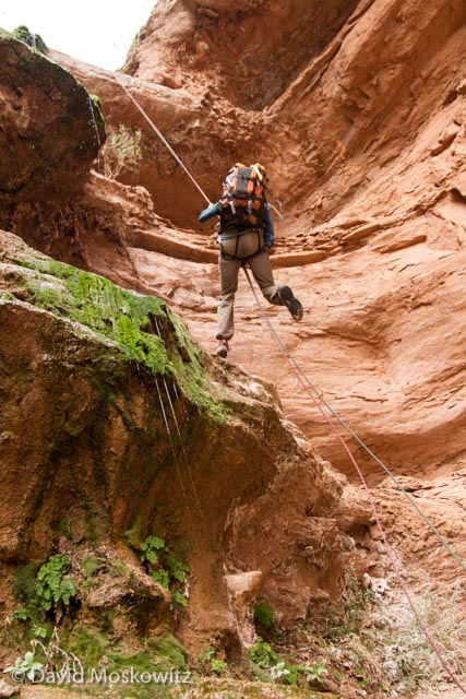 Stephanie Williams rappelling next two a hanging garden in Cove Canyon, a tributary of the Colorado River in the Grand Canyon, Arizona.