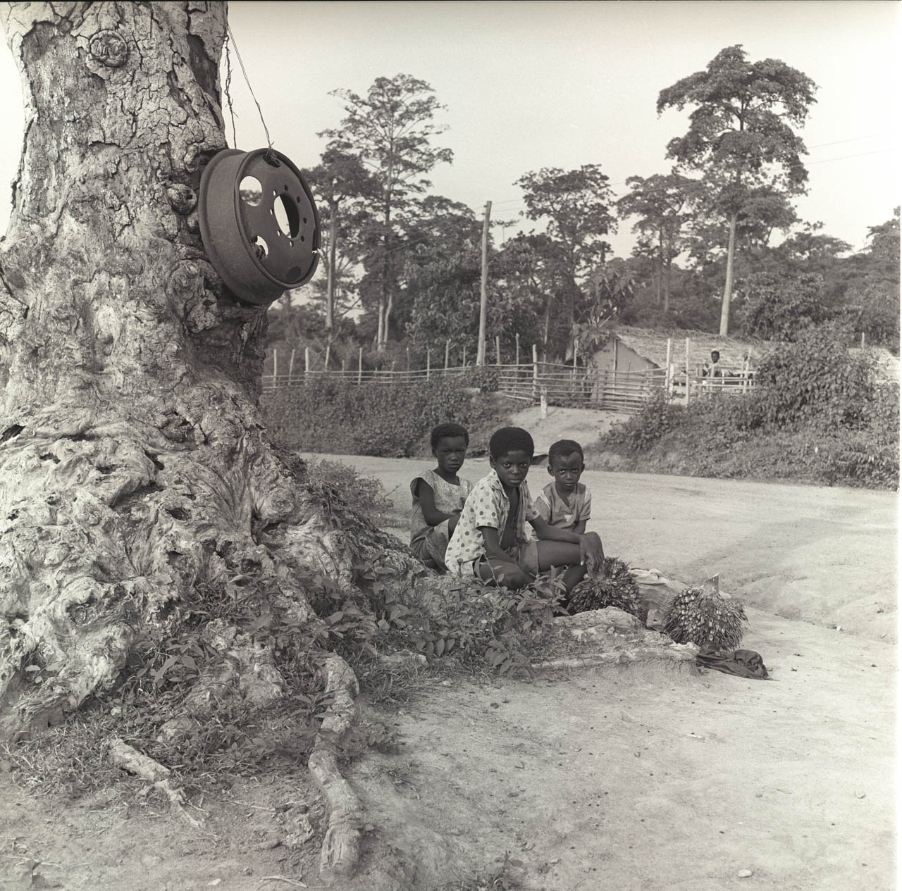 kids near tree.jpg