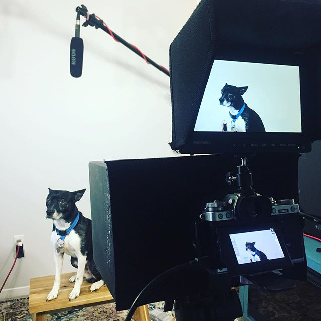 Say hello to my adorable assistant 🎥🥰 Sit tight, boy! #video #videography #camera #fujifilm #pet #dog #studio #shoot #film #gear #cameragirl #like #follow