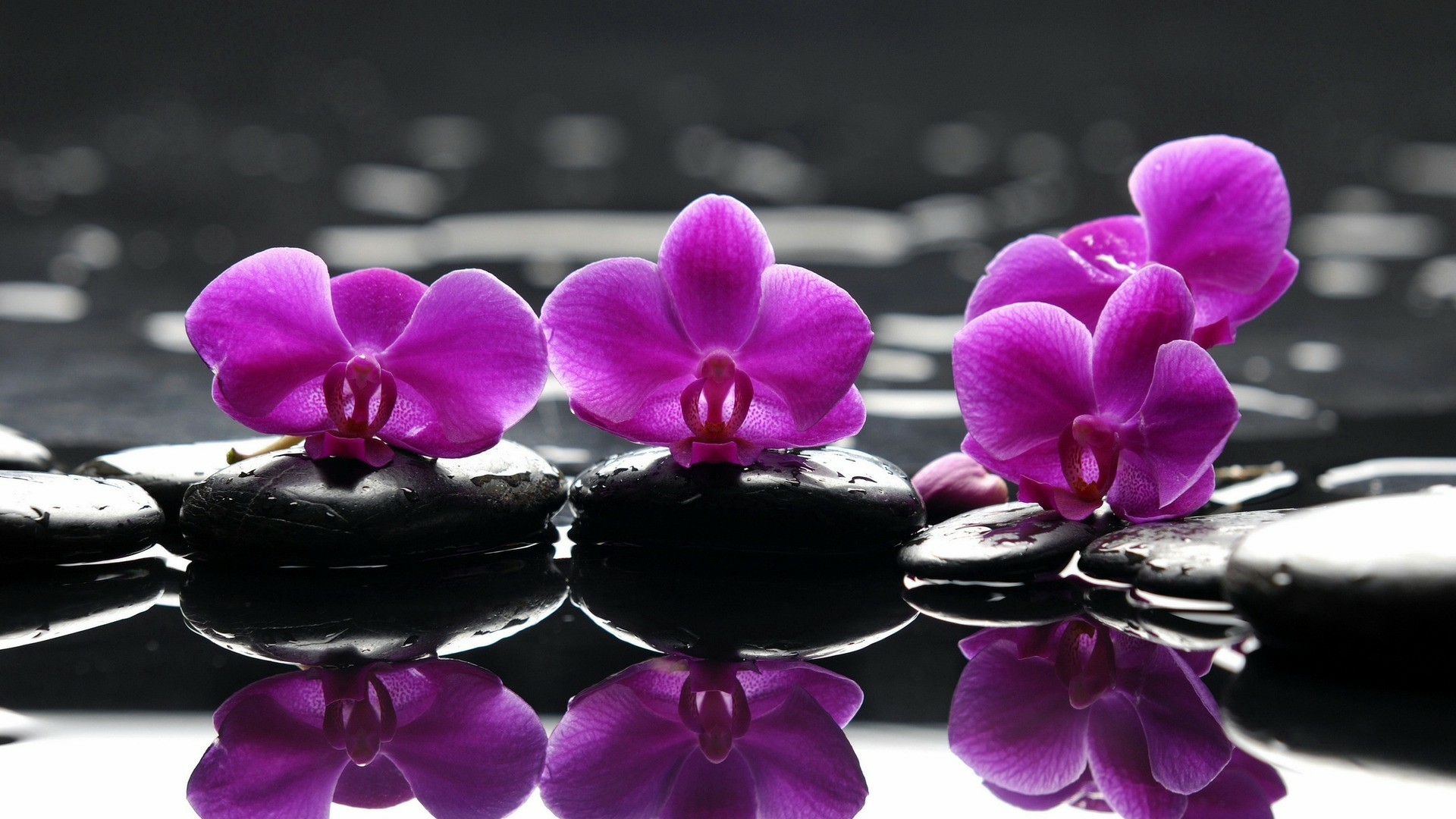 free-purple-orchids-flower-hd-wallpapers-download.jpg