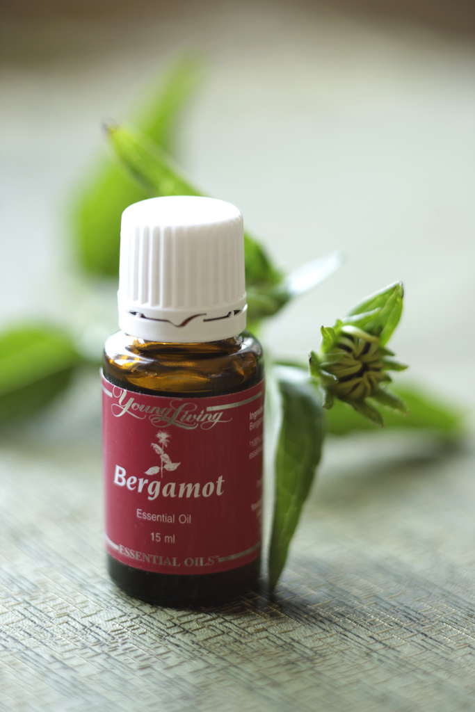 If you haven't tried Bergamot yet, I absolutely recommend it!