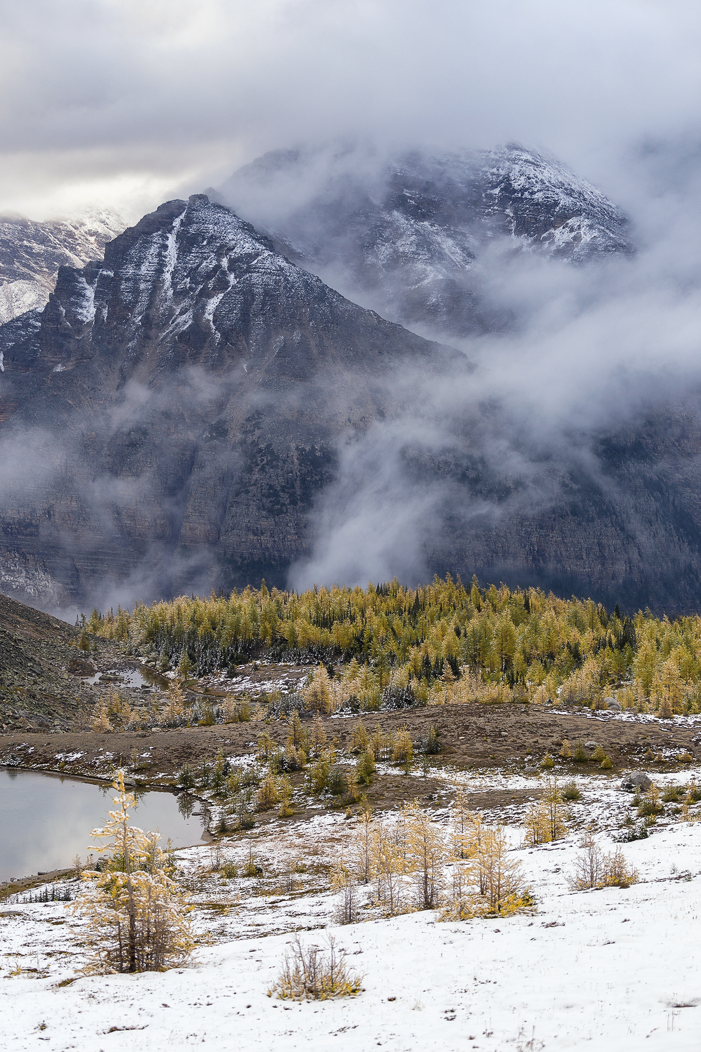 Golden Larches and fresh snow make this hike even more impressive.