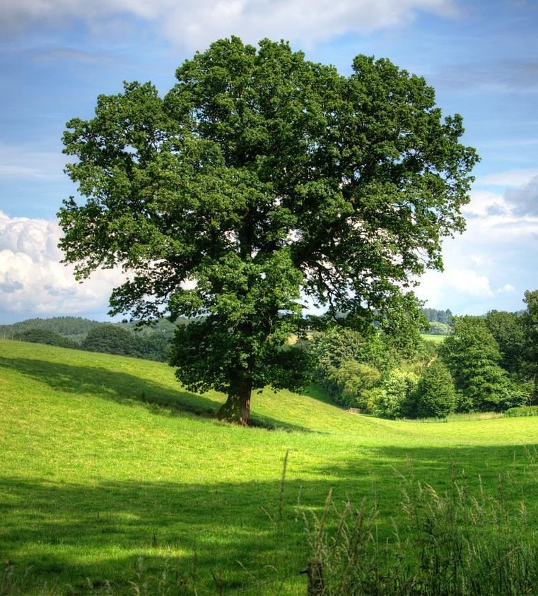 tree-402953_1280.jpg