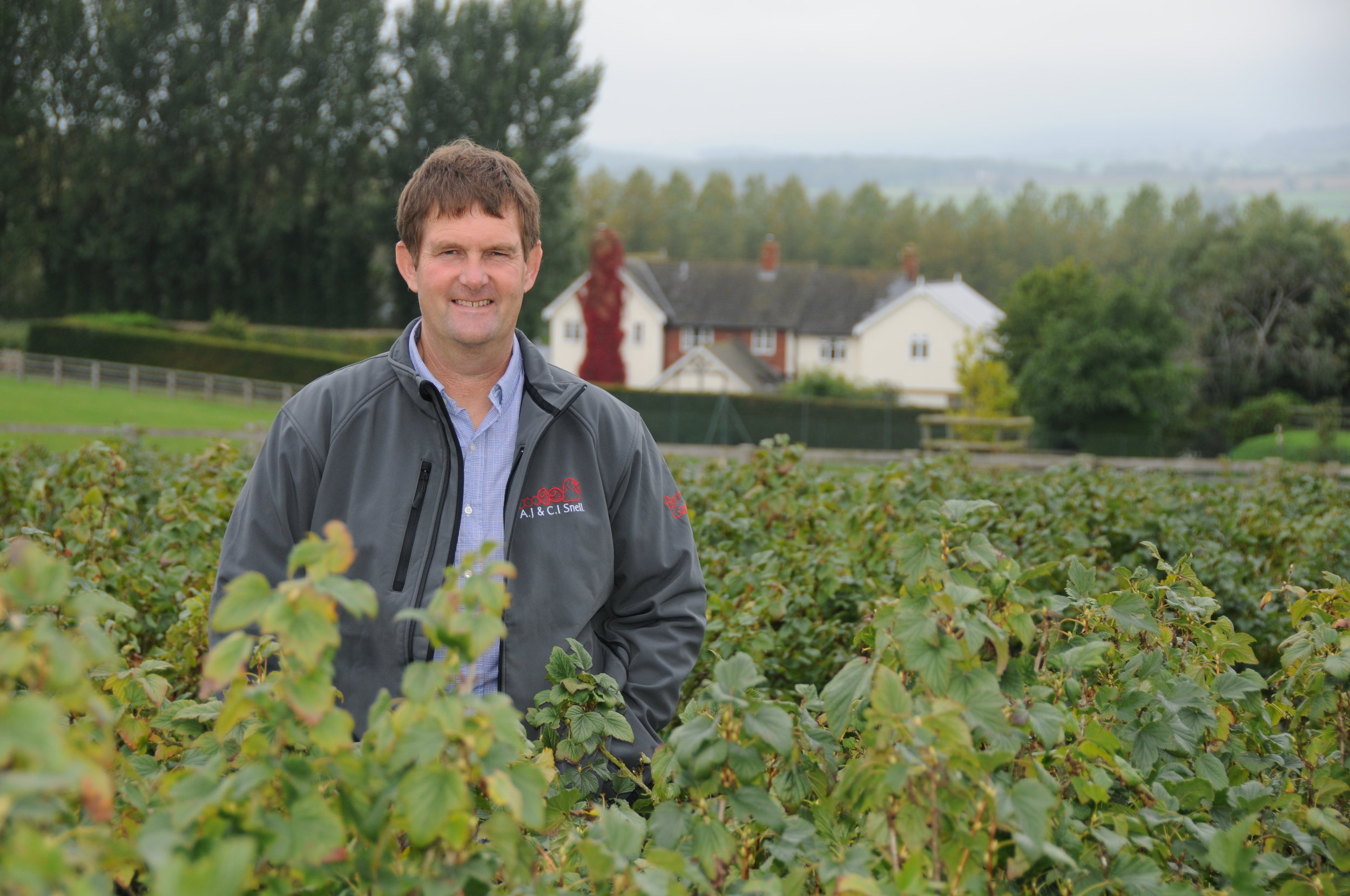 Anthony snell in Blackcurrants.JPG
