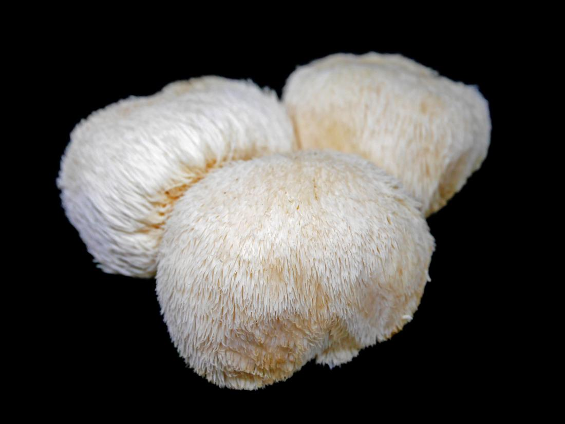 lions-mane-mushrooms-nootropics-organic.jpg