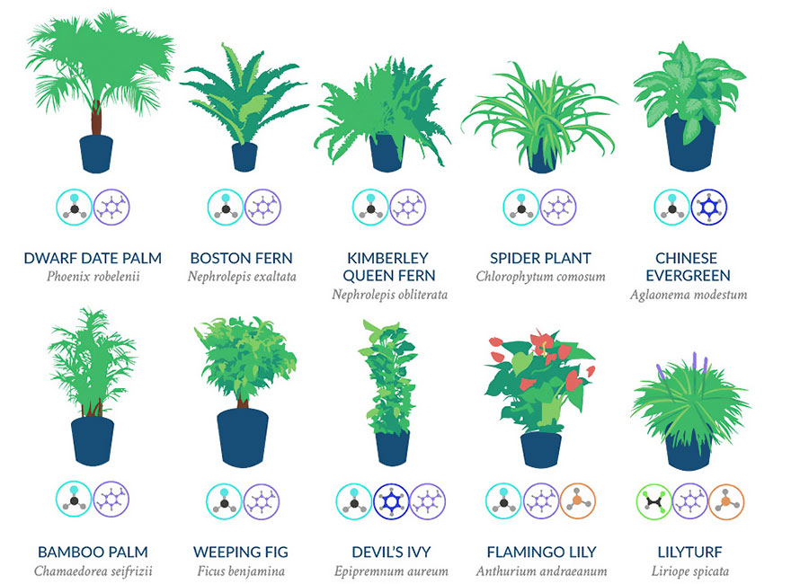 air purifying plants biofilico interiors biophilic design
