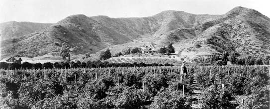 The photo above shows a portion of the Harper ranch at the mouth of Laurel Canyon. Locals would drive their horse-drawn wagons into the cooler canyon on summer Sundays for a picnic. It was rumored that bandits and thieves hid out in the many caves that can still be seen at the intersection of Lookout Mountain and Laurel Canyon Boulevard. Sheep ranchers also used the hillsides and shaded valleys for grazing.