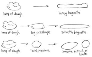 An Illustration from Bread Science.