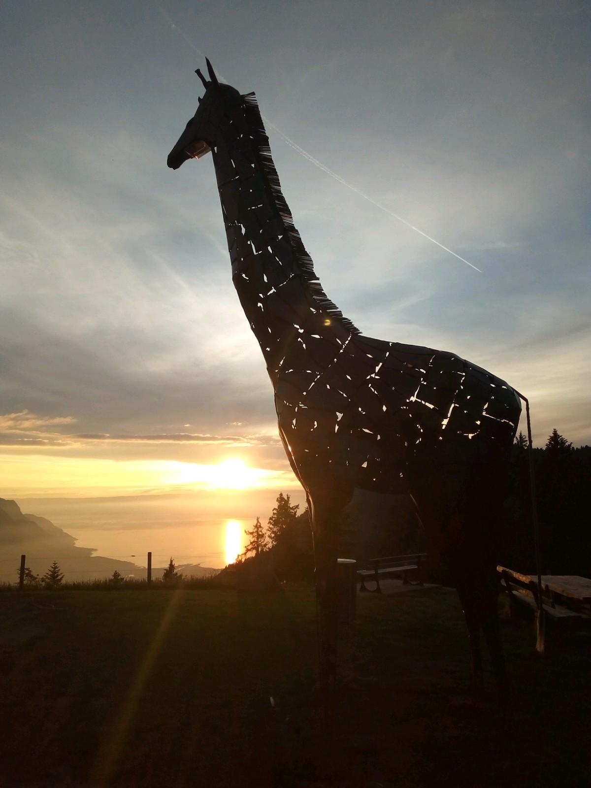 A8 - La Girafe (Prafandaz)