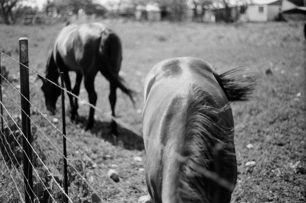 ©roeg_cohen_Texas_horse_colt_mag-4.jpg
